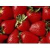 草莓提取物 草莓浓缩粉