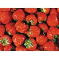 陕西菠萝粉固体饮料代加工颗粒剂粉剂药食同源食品委托生产