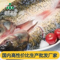 供应安徽三珍食品冷冻烤鱼食材 开背草鱼直销