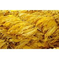 硫酸烟碱  厂家烟叶提取物