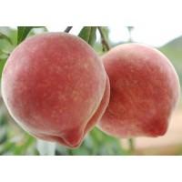 水蜜桃提取物 水蜜桃果粉