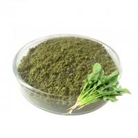 菠菜粉 代餐粉原料现货批发厂家直销质量保证 菠菜提取物